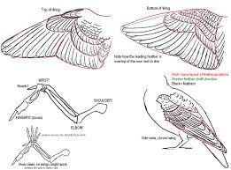 Bird Wing - wing tutorial by tnhawke on deviantart