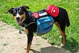 how to find a psychiatric service dog policygenius