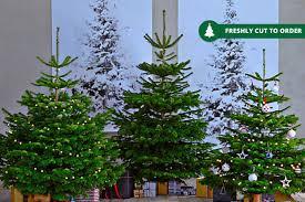 real nordmann fir tree 3 sizes