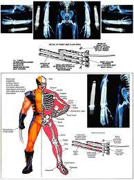 wolverine s claws marvel how exactly do wolverine s claws come out science