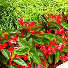 favorite summer annuals neil sperry u0027s gardens