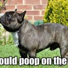 French Bulldog Meme - french bulldog thoughts by 9heyhey9 meme center
