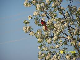 avon in bird in tree photo picture image indiana at city
