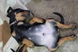 Tierheim Bad Salzuflen Hunde Große Hunde Kaufen U0026 Verkaufen Bielefeld Haustier Anzeiger