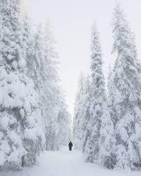 snowy winter forest in rovaniemi lapland finland december 2016