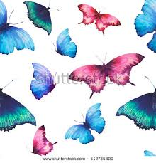 drawing butterfly stock images royalty free images vectors