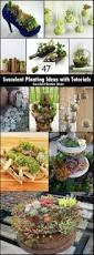 best 25 succulent ideas ideas on pinterest