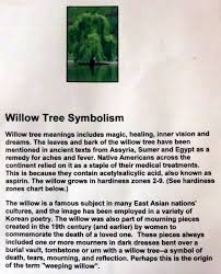 weepingwillow jpg your birth tree weeping willow tree weeping
