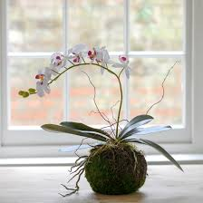 faux orchids artificial plant white orchid with moss nest pot flower studio