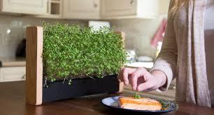 indoors garden ecoqube tiny indoor vertical garden grows micro veggies on its