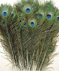 peacock feather fan feather peacock tails 10 12 feathers fan free p p kids