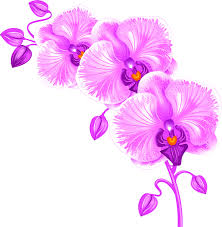 orchid decal orchid wall sticker floral wall decor vinyl