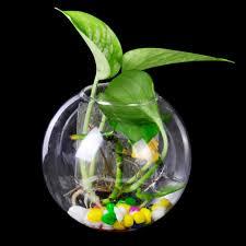 extra large 30cm clear glass terrarium ball vase bottle fish bowl