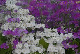 plan your winter garden get it online joburg east