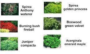 Bushes For Landscaping Best Small Landscape Bushes Adorable Bushes For Landscaping Green