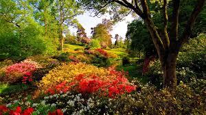 flower nature trees bushes freshness leonardslee summer landmark