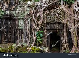 tree takes root angkor thom angkor stock photo 164835002