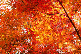 autumn light photography hd photos gallery clip art library
