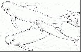 superb beluga whale coloring page with whale coloring pages