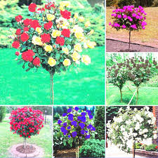 compare prices on large garden pots online shopping buy low price