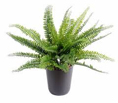 Plante Artificielle Exterieur Ikea by Nice Palmier En Pot Exterieur 10 Palmier Cycas Artificiel Mini