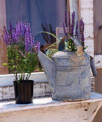 Galvanized Containers For Gardening Wshg Net Repurposing U2014 A Recipe For Charming Containers Full Of