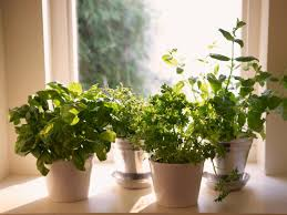 Kitchen Window Sill Decorating Ideas by How To Plant A Windowsill Herb Garden How Tos Diy