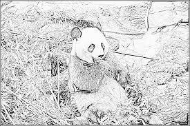 Coloriage Le Grand Panda à imprimer pour les enfants  Dessin