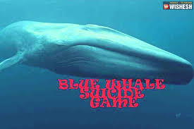 Challenge Victim Blue Whale Challenge Victim Dies In Mp
