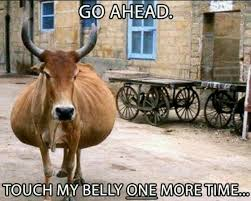 Texas Longhorn Memes - funny pregnancy memes glow community