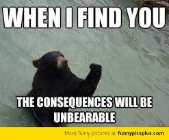 Meme Bear - revenge bear meme funny pictures