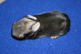 wildlife rehab clinic ridge mo education rabbit