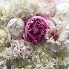 peony wedding flowers by eden blooms florist eden blooms