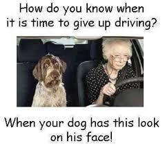 Dog Driving Meme - dog driver meme time to stop driving meme slapcaption com the