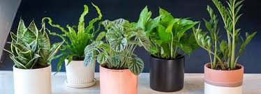 low light houseplants 90 awesome easy low light houseplants for indoor decor decomg