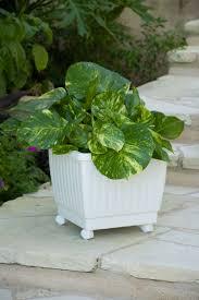 self watering rolling planter 15