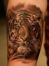 tiger tattoos search tigers tiger