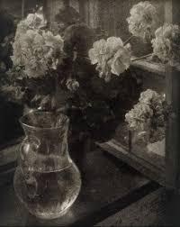 Kuhns Flowers - 53 best u003c3 heinrich kühn u003c3 images on pinterest photography