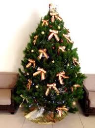 gold coast christmas trees real christmas trees