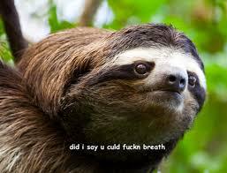 Sloth Whisper Meme - creepy sloth whisper