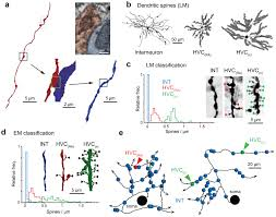em connectomics reveals axonal target variation in a sequence