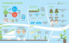 benefits of houseplants the benefits of plants 50290f2813148 w587 jpg