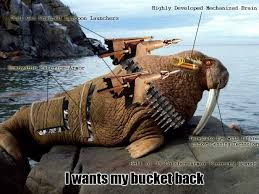 Walrus Meme - the complete walrus bucket saga bukketz is serious bizness
