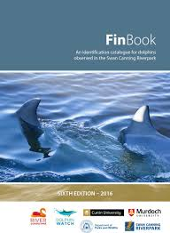identifying dolphins finbook river guardians
