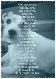 sympathy for loss of dog the 25 best pet sympathy quotes ideas on rainbow