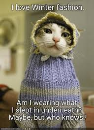 Winter Meme - lolcats winter lol at funny cat memes funny cat pictures with