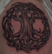 celtic tree zestymag