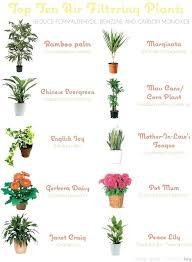 best light for plants low light plants indoor spurinteractive com