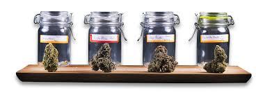 chambre de sechage cannabis comment faire le curing des têtes de cannabis royal seeds