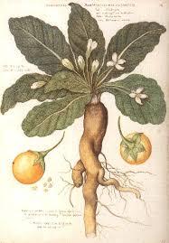 Glosario y propiedades mágicas de las plantas Images?q=tbn:ANd9GcSpso3H3VYlOfPmnJph9dBf6iaO7l3QOs6eCdZmk3VadvHW3ajV1w